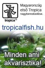 Tropical-fish